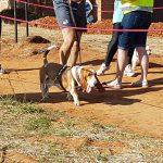 Langenhovenpark Parkrun Dogs Allowed | Bloemfontein Tourism