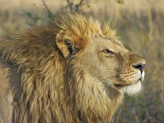 Zanchieta Wild Cat Farm / Lodge Banner - BloemfonteinTourism.co.za